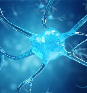 Как упражненията генерират нови неврони?