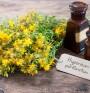Азбука на хомеопатията. Хиперикум (Hypericum perforatum)