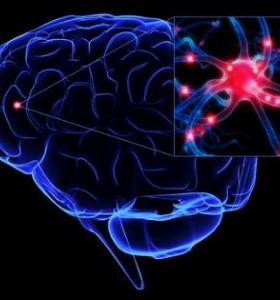 Как половите хормони въздействат на мозъка?
