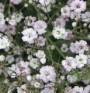 Екстракт от цвете може да направи революция в лечението на левкемията