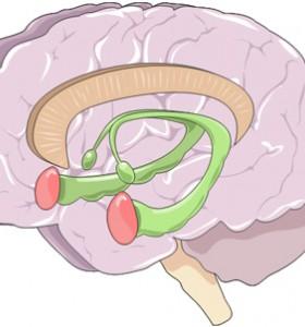 Левичарите, които прописват с дясната ръка, променят и мозъка си