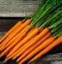 Морковите предпазват от рак и сърдечно-съдови заболявания