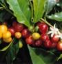 Защо кафето от зелени зърна е по-полезно?