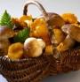 Порция гъби = на дневната задължителна дажба плодове и зеленчуци