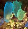 Мускулна тъкан ще се възстановява със съединение от морски същества