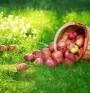 Ябълки за дълголетие и стройна фигура