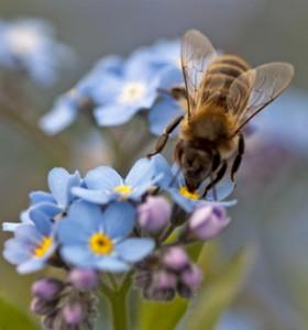 Алергия от насекоми – как да действаме при опасност