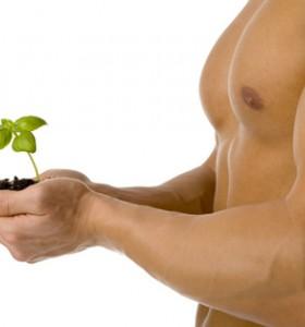 4 билки за добро либидо при мъжете