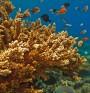 Създават слънцезащитно хапче от корали