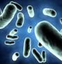 Храната ни определя чревната микрофлора