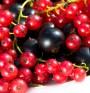 Горските плодове поддържат паметта ни