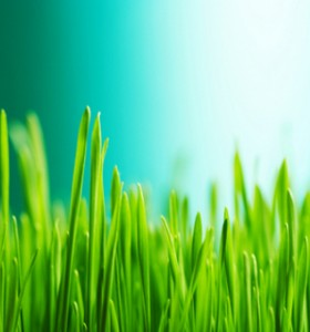 Био производството - как е уредено в ЕС