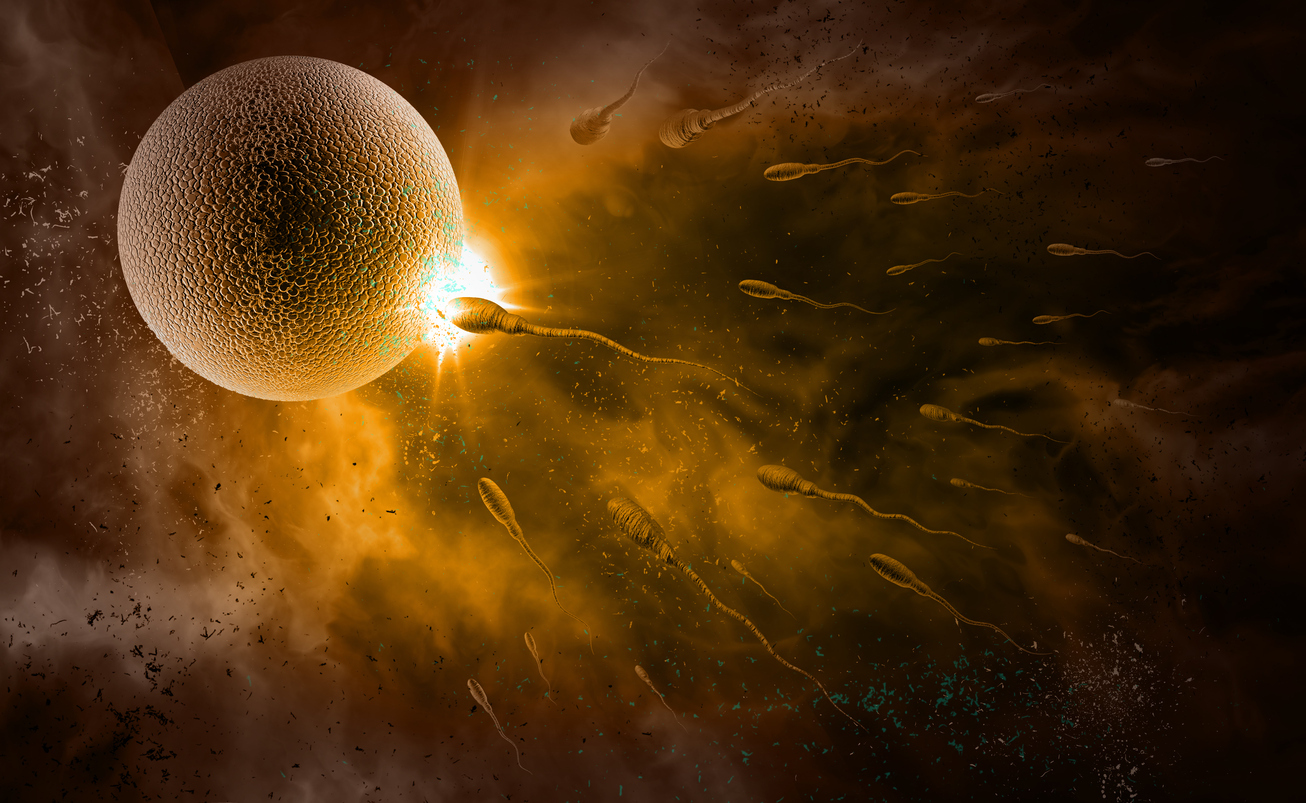Моментът на зачеването, когато яйцеклетката бива оплодена от сперматозоида, е
