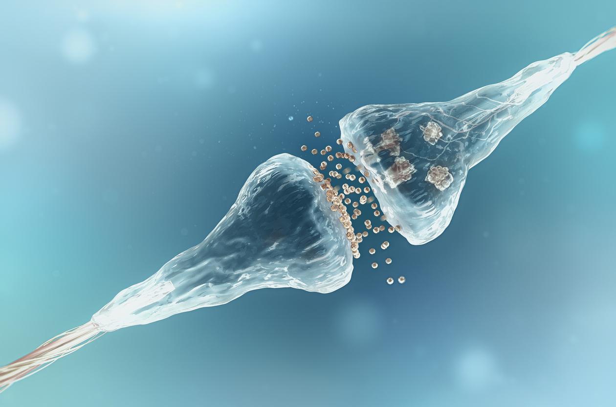 Международен екип от невроучени идентифицира вид мозъчни клетки, непознат до