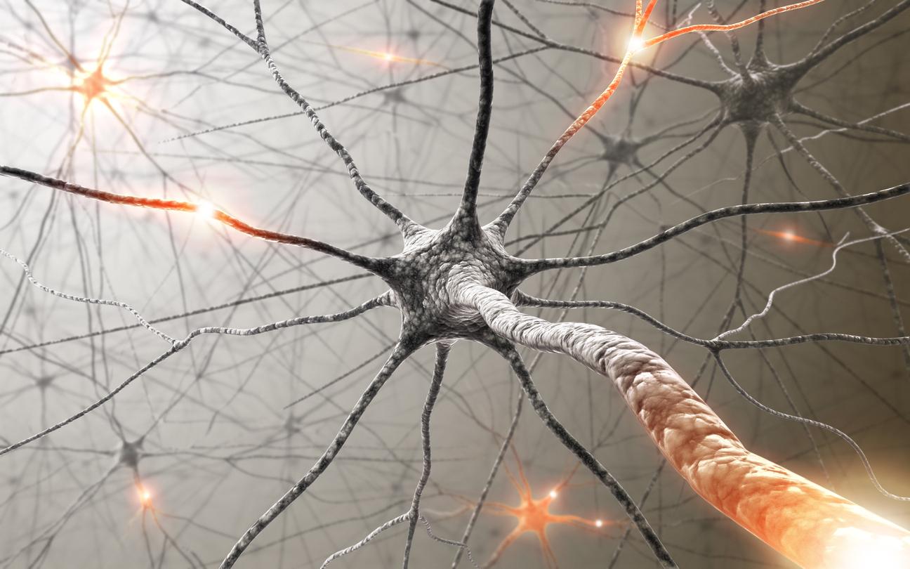 Огледалните неврони са специфичен клас от нервни клетки, които се