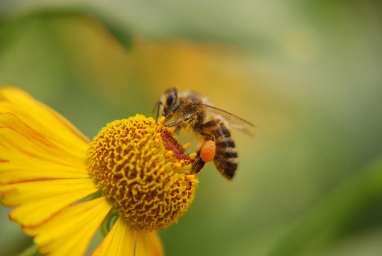 Медът с всичките му полезни свойства не е единственият здравословен
