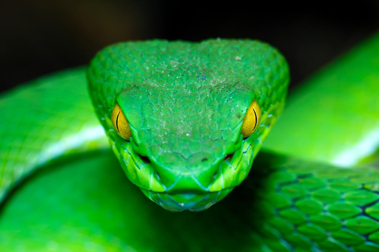 Снимка: Токсини в животинската отрова: медицинска употреба