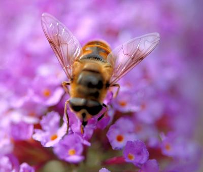 Алергията при ухапване от насекомо е сред често срещаните алергични
