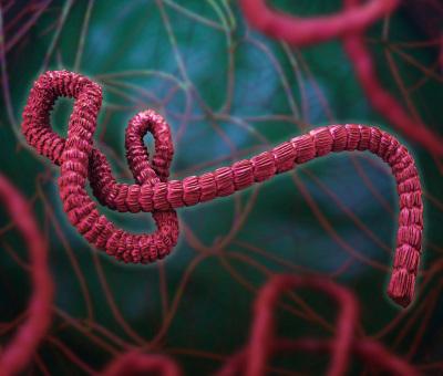 Епидемичен взрив на треска Ебола се регистрира в провинция на