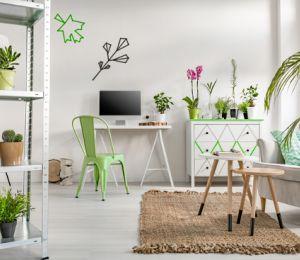 Пет растения, които пречистват въздуха в дома