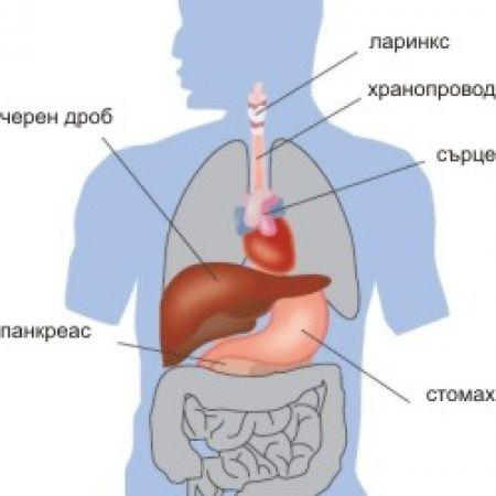 Прицелни органи