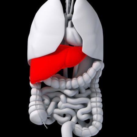 Черен дроб - топология