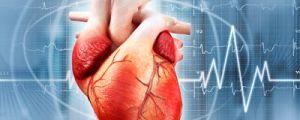 Сърдечната дейност се влияе от темперамента